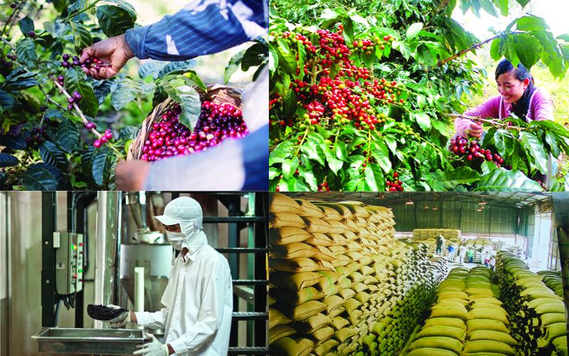 Sản xuất - Mua bán nông sản